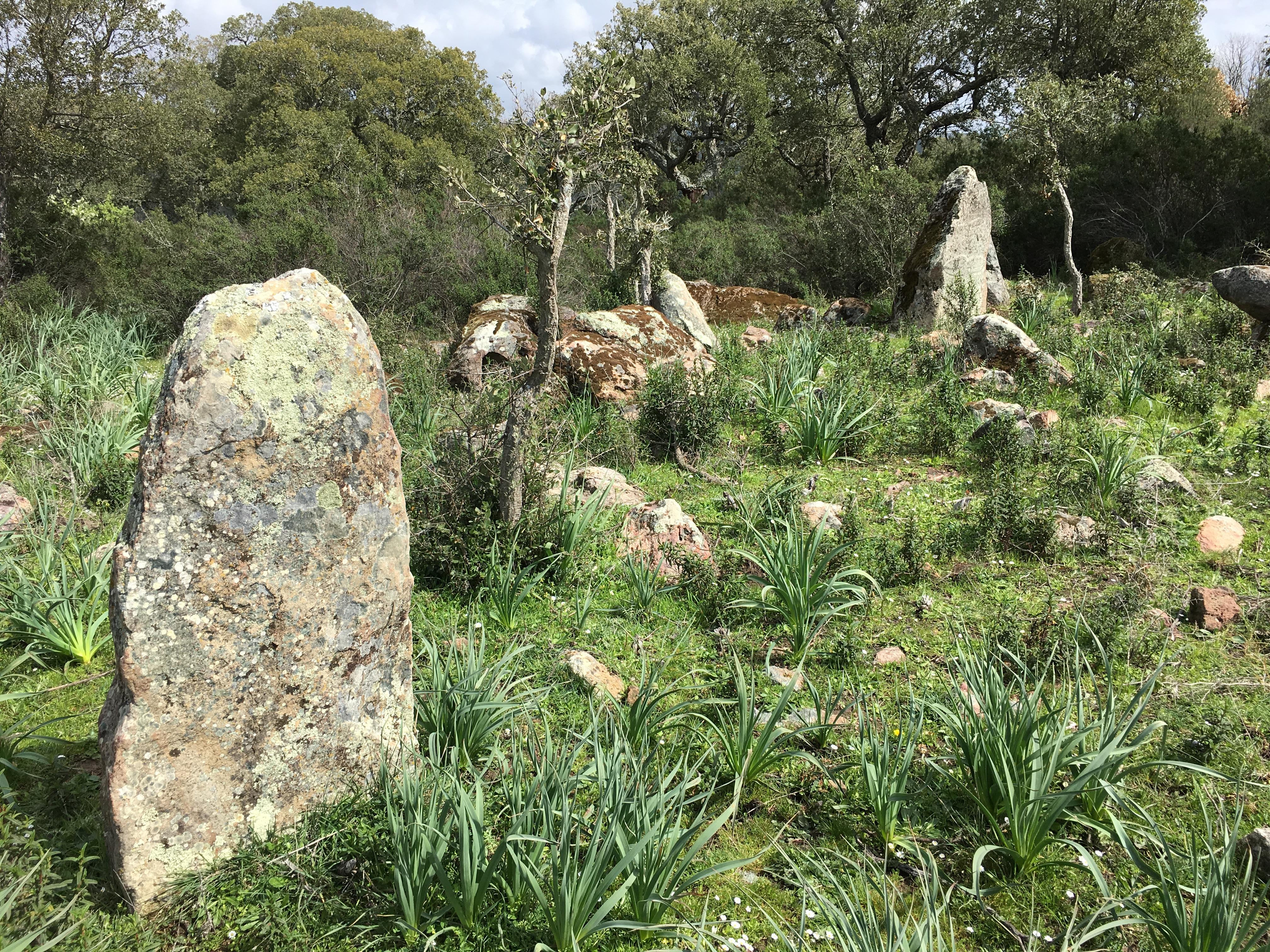 Allineamento di Menhir in localita Genna 'e Corte (Laconi)