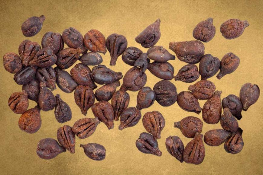 Semi di uva provenienti dal pozzo N di Sa Osa (fonte: Museo di Cabras)